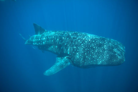 Mexican Dental Vacation Tours: Whale Watching